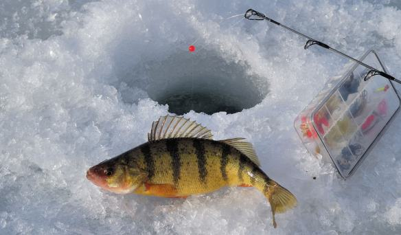 Grand traverse bay is got some action michigan fishing for Lake michigan perch fishing report