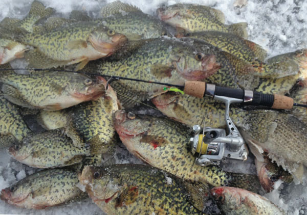 Ludington ice fishing for Ludington fishing report
