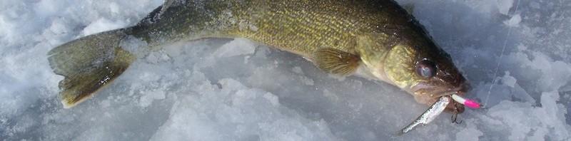 Ice fishing is on michigan fishing report for Pilgrims village fishing report