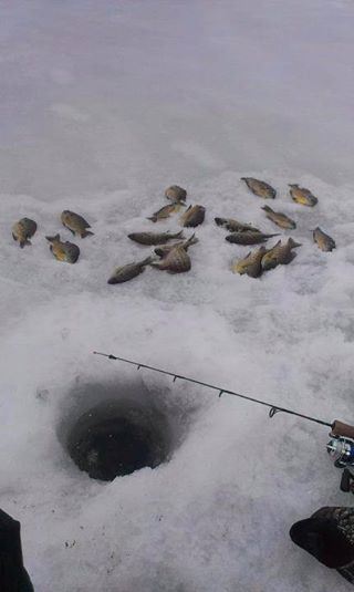 North Bay Cadillac >> Perch Bite   Michigan Fishing Report