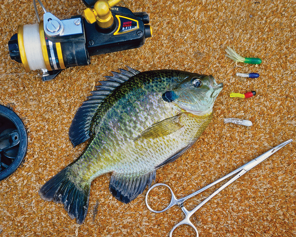 Michigan fishing report 6 20 14 michigan fishing report for Best shore fishing in michigan