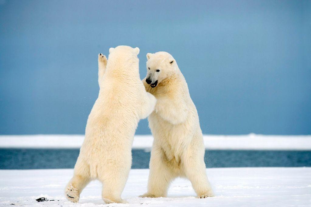 Dancing-Bears