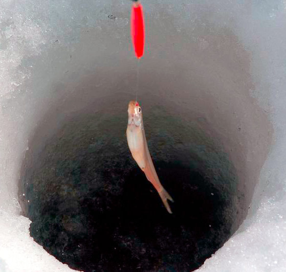 Smelt-Ice-Fishing