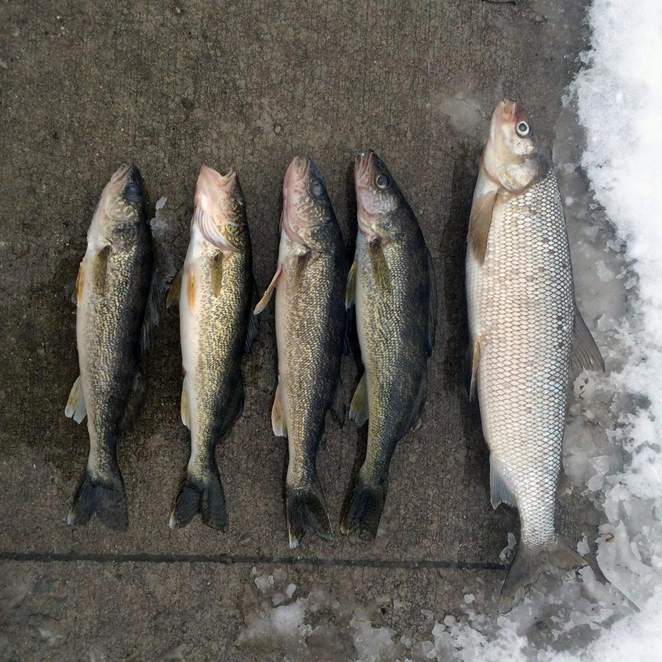 Tip up town fishing report 1 15 2015 michigan fishing report for Lake leelanau fishing
