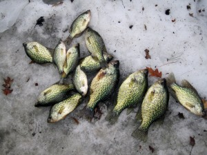 Lake Cadillac Crappies on Last Ice