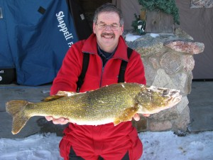 "nice Walleye @ 31"" and just over 11#, taken from Portage Lake by Dave Keene"