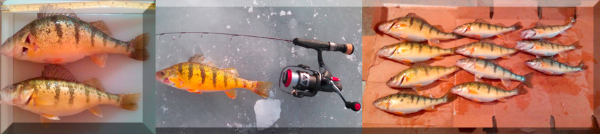 Empire Outdoors Perch Ice Fishing Tournament March 7th.