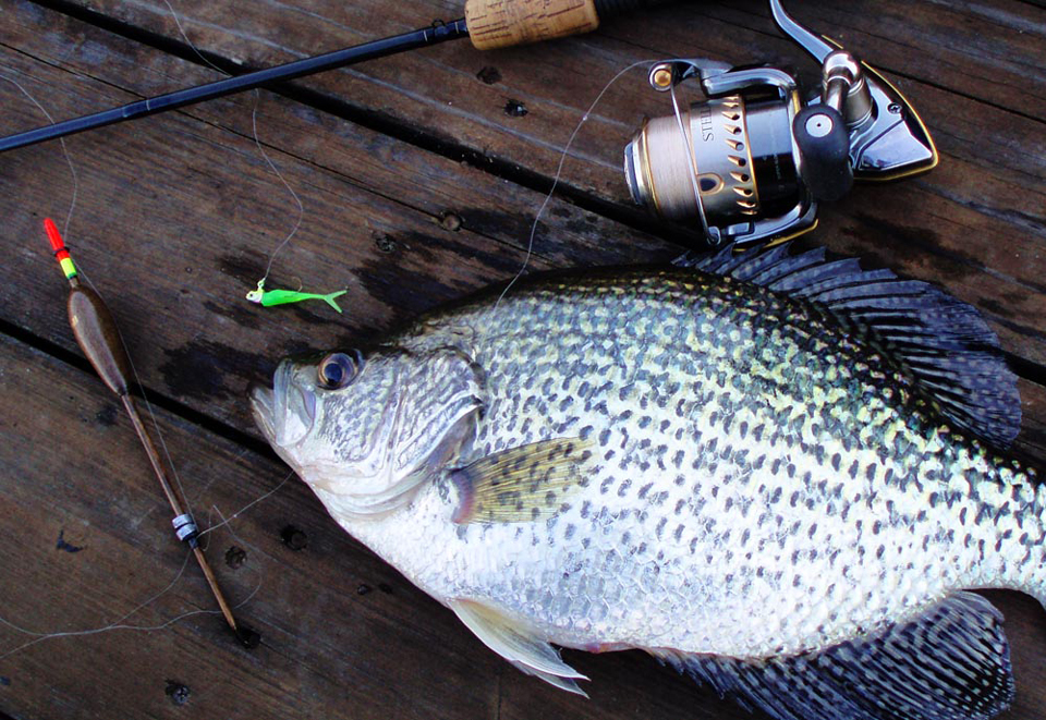 Spring Crappie
