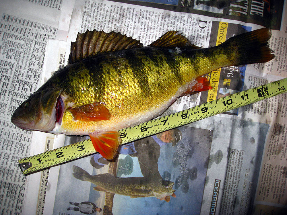 Michigan fishing report i know where the fish are biting for Lake michigan perch fishing report