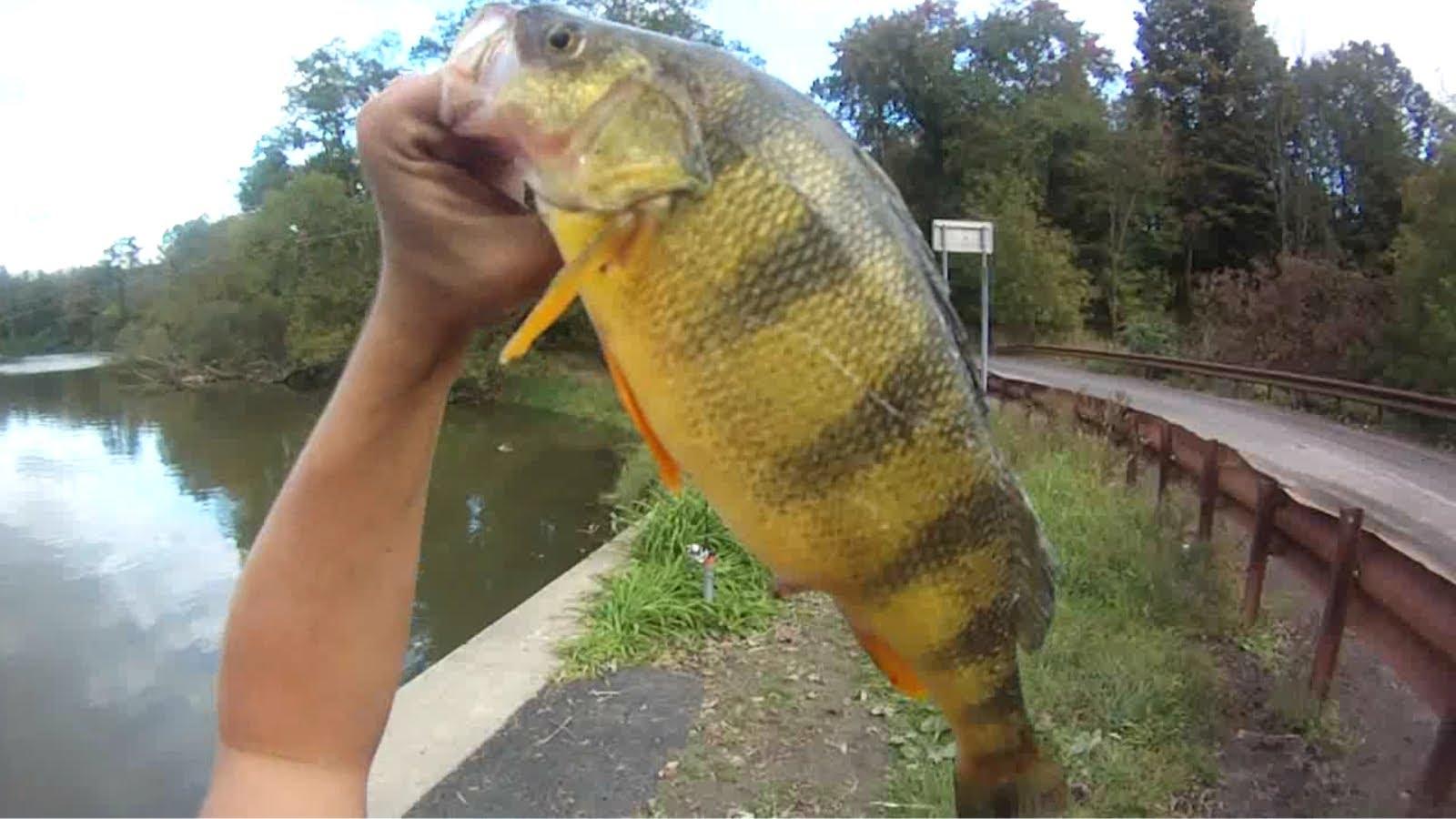 Maxresdefault Michigan Fishing Report