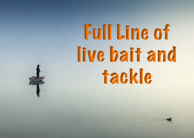 Full line of live bait and tackle
